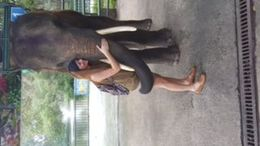 After the elephant ride, I was able to give this sweet elephant a hug. She hugged me right back. It made my day! , Sara M - January 2016