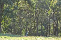Photo of Sydney Australian Wildlife 4WD Tour from Sydney another roo in the wild