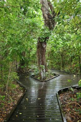 Photo of Cairns & the Tropical North Green Island Day Trip from Cairns Both way nice