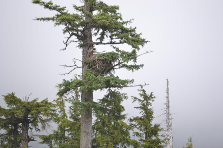 Eagle nest - Ketchikan
