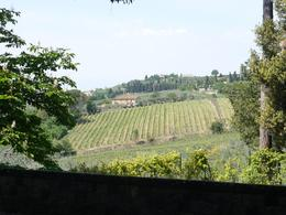Photo of Florence Chianti Region Wine-Tasting and Dinner Half-Day Trip from Florence Vineyards
