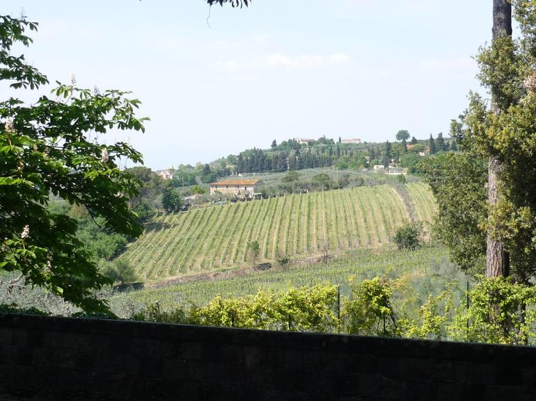 Vineyards - Florence