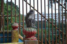 Just one of the many monkeys you will encounter on your journey to the top. , Charles - March 2014
