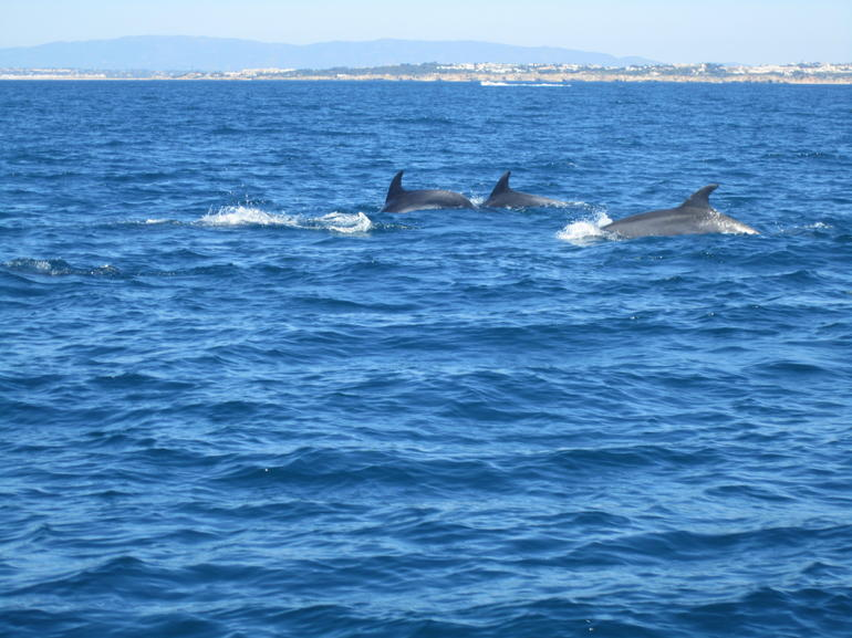 Dolphin Siting - The Algarve