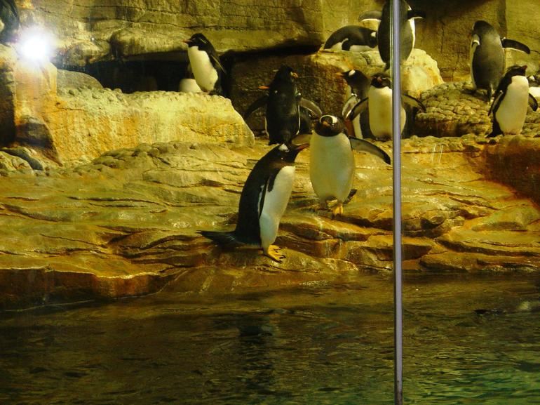 Penguins at Shedd Aquarium - Chicago