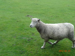 Photo of Auckland Waitomo Caves and Rotorua Day Trip from Auckland Sheep