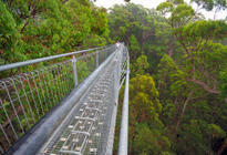 Photo of Perth Valley of the Giants and Tree Top Walk Day Tour from Perth