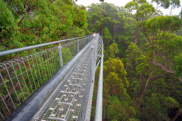 Treetop walk path, Valley of the Giants - Perth