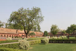 The beautiful green garden of Agra Fort - September 2012