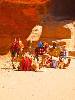 Photo of Amman 3-Night Jordan Private Tour: Petra, Wadi Rum and the Dead Sea Camels