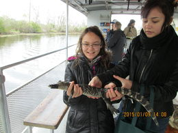 My daughters Lourdes and Rachel enjoy the young alligator provided by the tour guide. , Shelley S - April 2015
