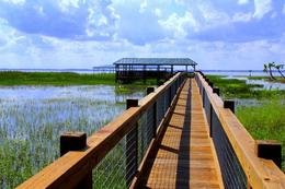 Photo of Everglades National Park Florida Everglades Airboat Tour and Alligator Encounter with Lunch Dock.jpg