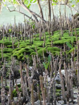 Cool plants in the Everglades., kellythepea - May 2014