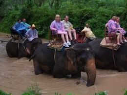 Completely amazing to have the mahout get off of the elephant and allow us to ride without him. Wonderfully intelligent and gentle animals. - May 2010