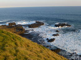 Photo of Melbourne Phillip Island Penguin Small Group Eco Tour from Melbourne South Coast
