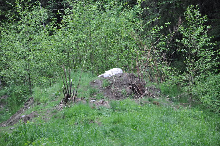 Wildlife wolf at the Gouse Mountain - Vancouver