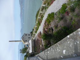 The lovely rose garden on Alcatraz Island. , Cherrie H - April 2015