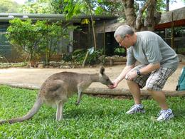 Feeding the wallaby - May 2010