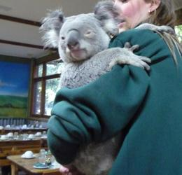 Breakfast with the koala at Featherdale, Anna J - August 2009