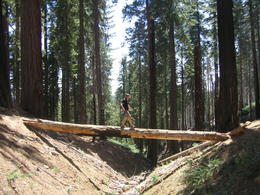 Photo of San Francisco 3-Day Yosemite Camping Adventure from San Francisco Mariposa Grove