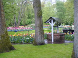 Photo of Amsterdam Keukenhof Gardens and Tulip Fields Tour from Amsterdam One of many beautiful scenes in the garden