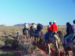 Our tour group on our camel ride through Uluru - October 2009