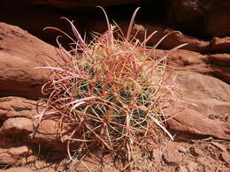 For nature lovers, there is always something to admire, even in a desert place. , Pierre L - October 2013