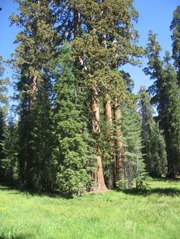 Photo of San Francisco 3-Day Yosemite Camping Adventure from San Francisco Mariposa Grove #2