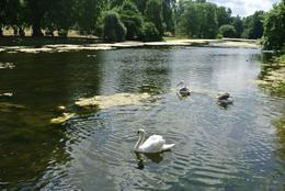 Photo of London London Royal Parks Bike Tour including Hyde Park Park?.......