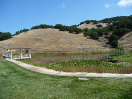 Photo of San Francisco Napa and Sonoma Wine Country Tour Pond with lilypads