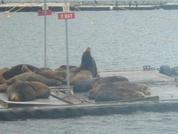 Going by the bait docks?, got to see lots of sea lions. , Sherry J - January 2012