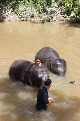 Photo of Kuala Lumpur Private Tour: Elephant Orphanage Sanctuary Day Tour from Kuala Lumpur Taking a bath