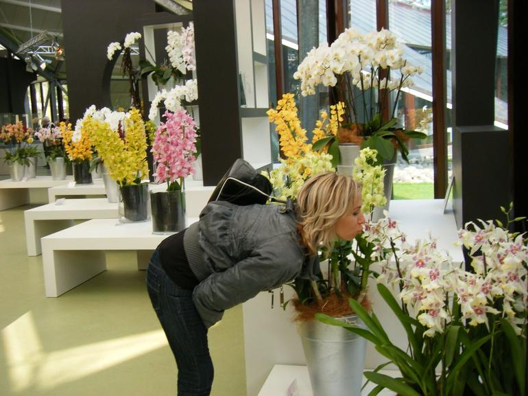 A rose smelling the orchids - Amsterdam