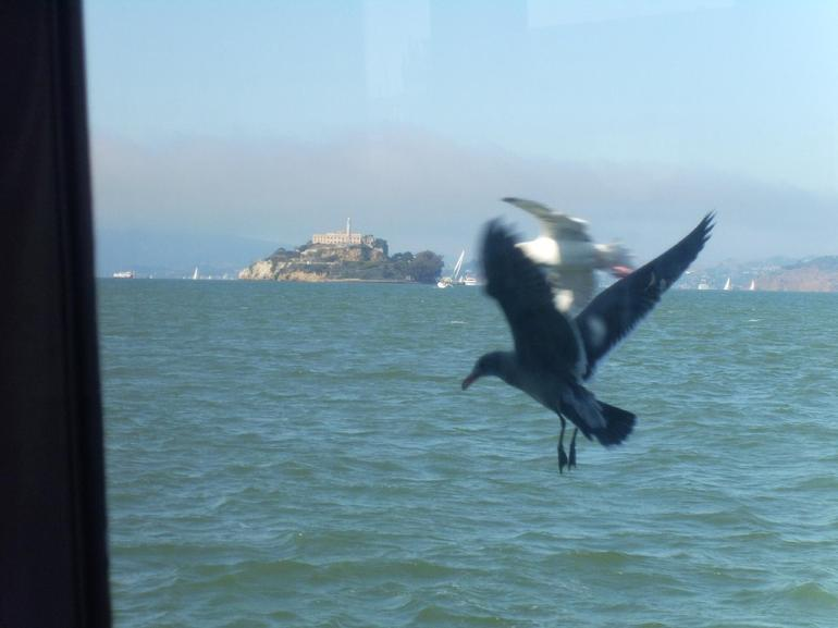 Birds in flight - San Francisco