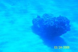 Photo of Cayman Islands Grand Cayman Seaworld Observatory - Shipwreck and Fish Feeding Show Clear View