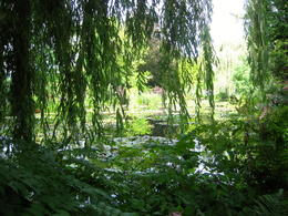 A view in Monet's Japanese Garden , Sheila E - September 2013