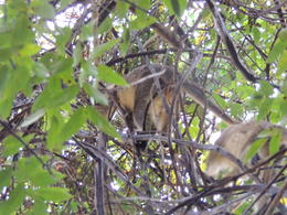 Photo of Barbados Best of Barbados Tour Green Monkey's
