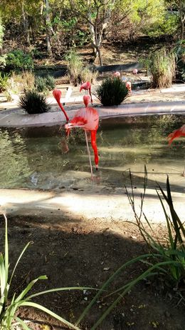 Flamingos stand on one leg while they are fishing....odd, Josh - February 2015