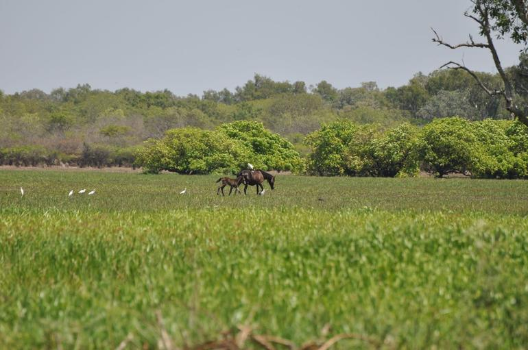 wild horses near yellow river - Darwin