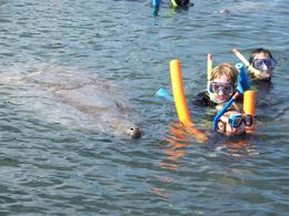 Photo of Orlando Swim with Manatees at Crystal River plus Everglades Airboat Adventure 1321