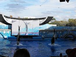 SeaWorld: Shamu - Believe - January 2010