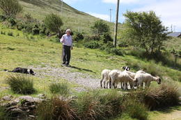 Photo of   Sheep herder