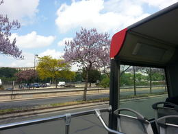 Just beside Eifel tower, on the and quot;Rouge Buss and quot; deck, one sees three adjacent trees,each with a different color. They look great to be seen. , Elsayed K - May 2013
