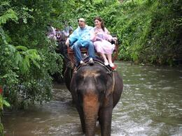 Photo of Bangkok Khao Yai National Park and Elephant Ride Day Trip from Bangkok What if we fall in