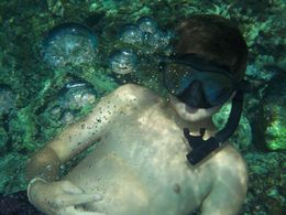 Cameron snorkeling in Kealakekua Bay , Noreen H - August 2015