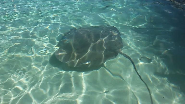 Bora Bora Snorkel, Shark and Ray Feeding Excursion - Bora Bora
