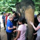 Photo of Kuala Lumpur Private Tour: Elephant Orphanage Sanctuary Day Tour from Kuala Lumpur Elephant Sanctuary