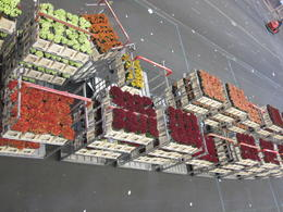 Photo of Amsterdam Holland in One Day Sightseeing Tour Flower Auction