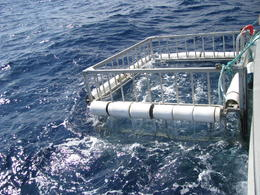 Photo of Oahu Oahu Shark Dive the cage
