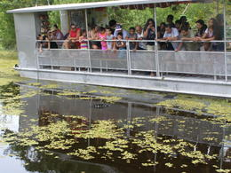 Photo of New Orleans Swamp and Bayou Sightseeing Tour from New Orleans viewing deck